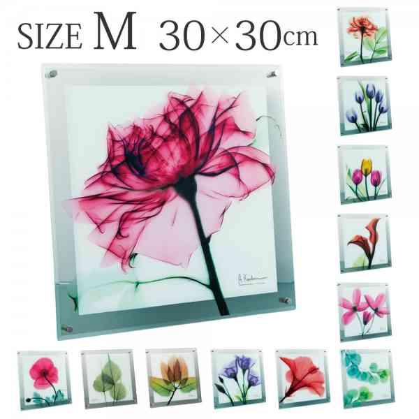 アートパネル x線 アートガラス 壁掛け X-RAY Glass Art ガラスアート Mサイズ